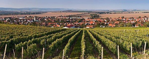 Kvalitní surovina. To je podle vinaře Jana Cíchy zBlatnice základní předpoklad pro výrobu kvalitního vína. Ikdyž zkouší některé nové odrůdy révy vinné, při práci raději volí ověřené postupy.