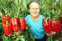 Vracovské papriky Majka a Bajka mají prodlouženou registraci na dalších deset let.