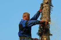 V Lipově obnovuje vedení obce dřevnaté porosty. Nechalo pokácet přes dvacet stromů.