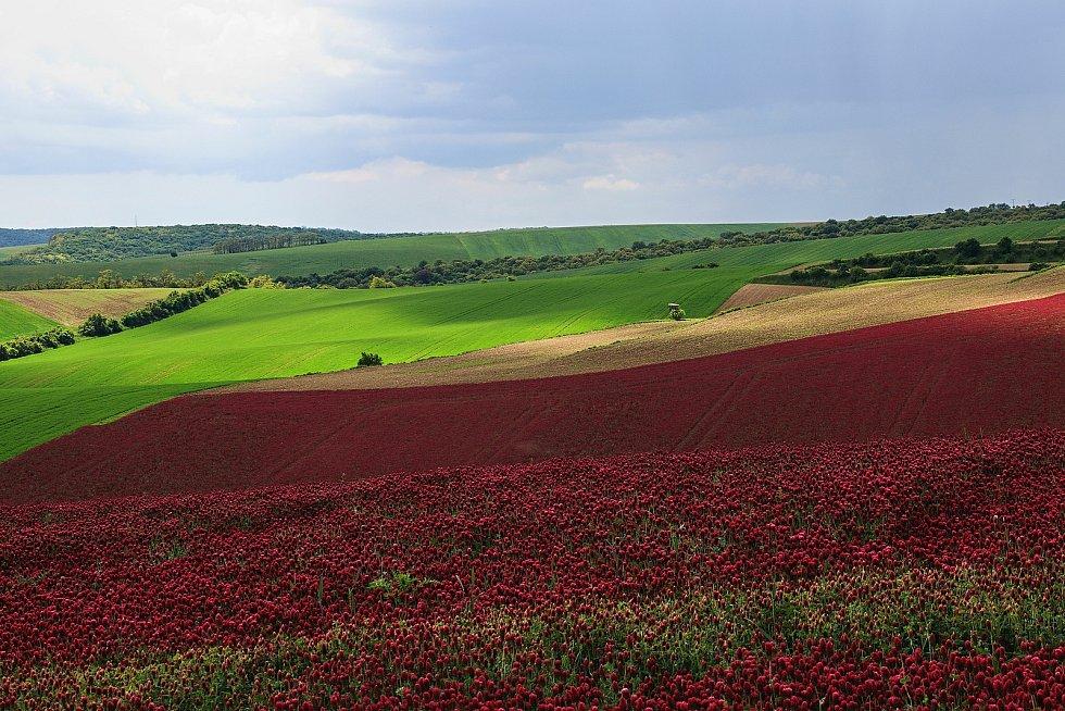 Červený jetel v okolí Borkovan.