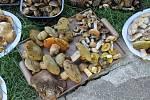 Miloslav Belka z Mikulčic si v posledních dnech domů přinesl témě sto kilo hub.