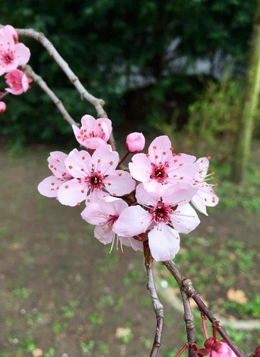 """V dubnu nás překvapilo ,,aprílové"""" počasí. Slunné dny střídaly plískanice a sníh."""