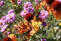 Podzim je již v plném proudu. Jeho barvy jsou však hravé a veselé.