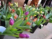 Výstavě věnované jarnímu kvítí a jarním dekoracím dominovaly tulipány.