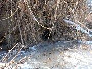 Nory bobrů ústí nad ledem, ale často i pod ním.