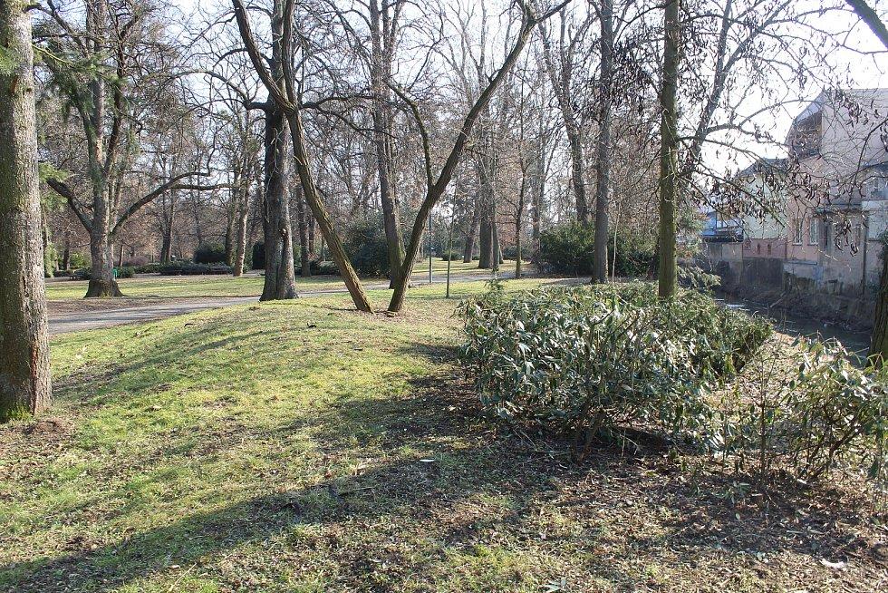 Městský park v Kyjově po prořezání spodního keřového patra.