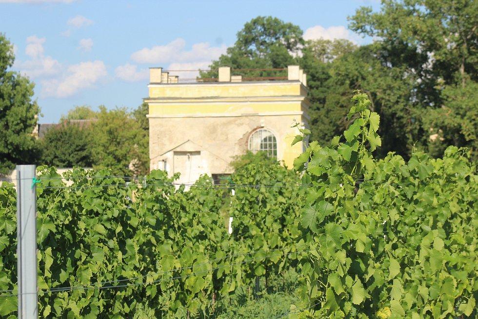 Místo budoucího kulturně-vzdělávacího vinařského areálu ve Veselí nad Moravou a jeho okolí koncem července 2021.