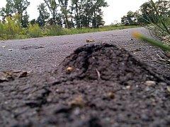 Za hrby na cyklostezce může přeslička, která prorůstá asfaltem.