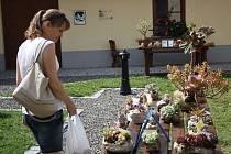 Informační centrum v Kyjově hostilo na dva dny prodejní výstavu sukulentů Jaroslava Honce z Lovčic.