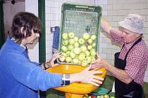 Jablka je nejprve nutné podrtit. Až poté se lisují.