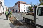 Nová zeleň zkrášlí některé nedávno opravené ulice v Hodoníně.