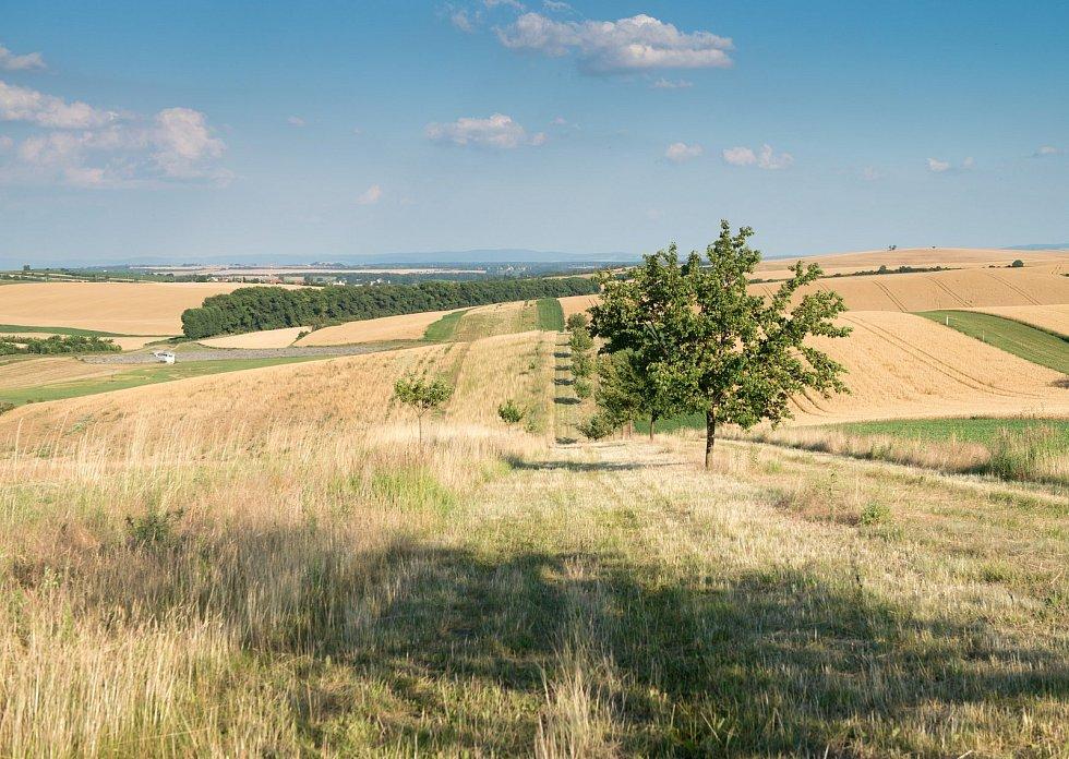 Do krajiny vrací vodu i život, budování biokoridorů je v kurzu. Na snímku biokoridor v Šardicích na Hodonínsku.