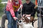 Happy dogs day (Šťastný psí den) ve Bzenci.