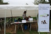 Ve Veselí nad Moravou hledali domov psům z útulků.