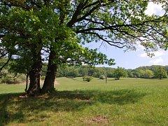 Rezervace Kútky na Hodonínsku leží na území Radějovské obory.