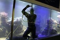 Čuštění akvária Zoo Hodonín.