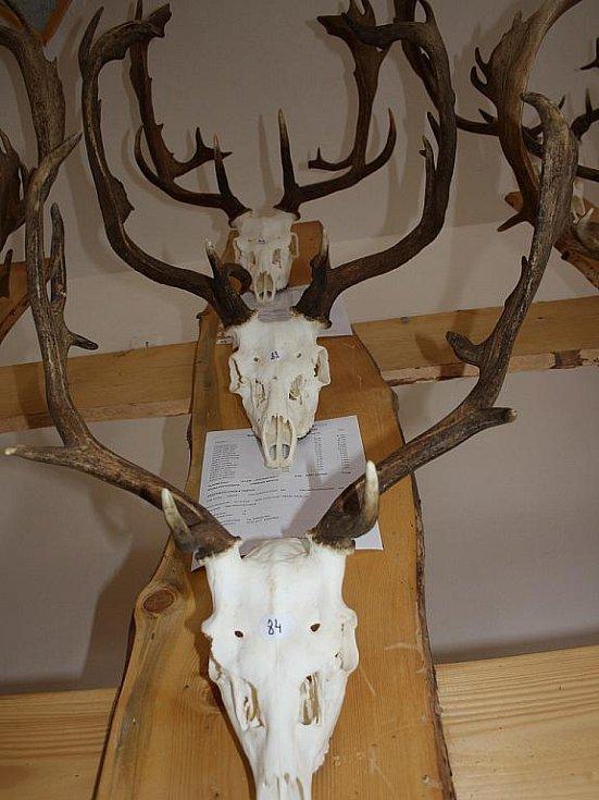 Myslivci z Hodonínska vystavují v prostorách Městského kulturního střediska Kyjov nejlepší trofeje.