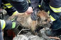 Hasiči v Mutěnicích zachránili psa a kočku z kanalizace.