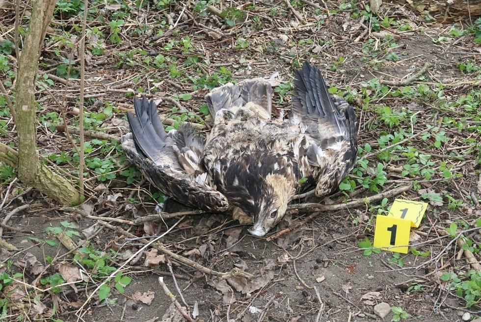 Uhynulí draví ptáci, okolnosti jejich smrti vyšetřuje policie.