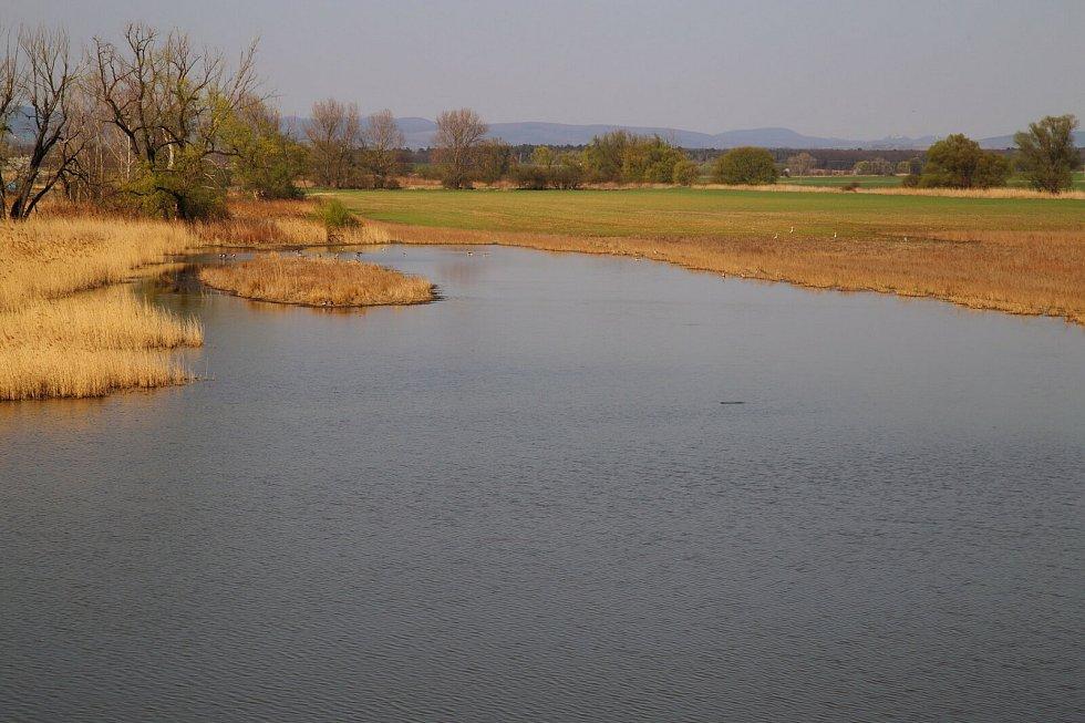 Ptačí park Kosteliska. Jedna z vodních ploch v nově vznikajícím Ptačím parku Kosteliska.
