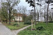 Obec nechala vysázet strovku nových stromů. Nahradily ty, které musely ustoupit novému průtahu.