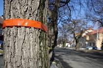 Lipovou alej v Hroznové Lhotě čeká kácení i vysazování nových stromů.