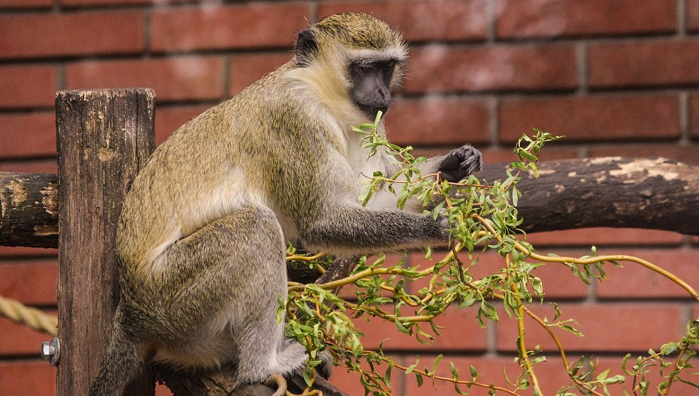 Zoo Hodonín znovu vítá návštěvníky.