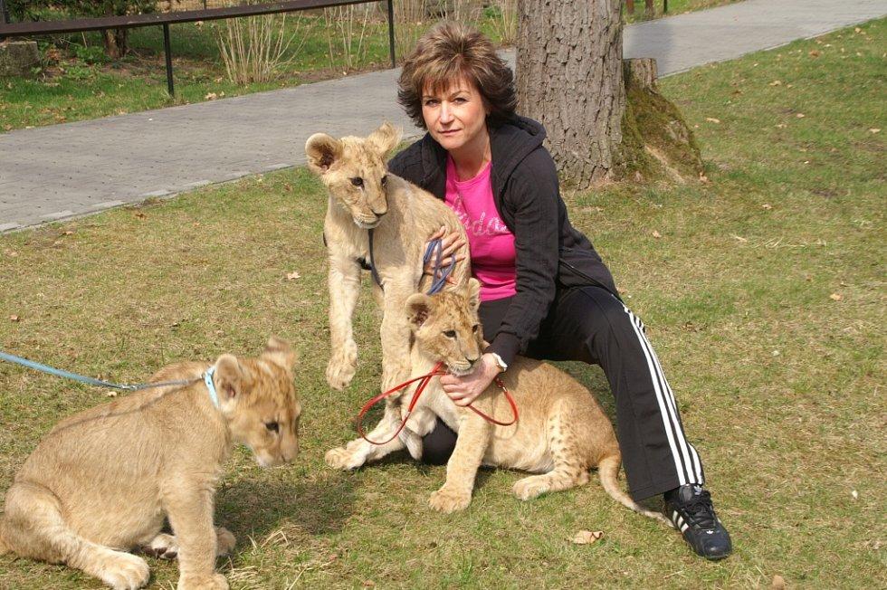 Lvíčata dělají náhradní mámě radost. Je s nimi ale také spousta práce.