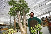Pramáti tlustic je stará osmasedmdesát let, měří dva metry a váží dvě stě kilo. Do Lovčic ji přivezl pěstitel sukulentů Jaroslav Honc.