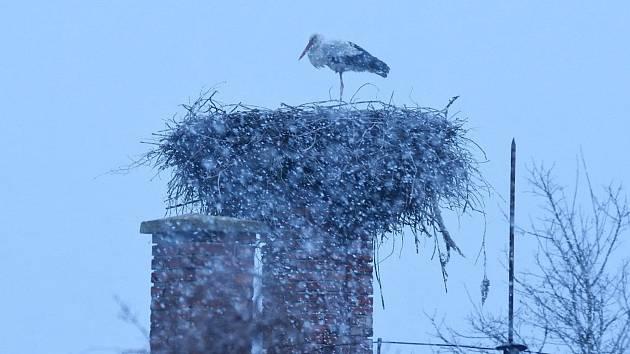 Čáp přiletěl do dubňanského hnízda, přivítala ho ještě zima.