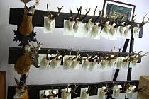 Myslivcům v Hodoníně v sobotu prošly rukama stovky trofejí.