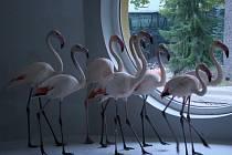 Plameňáci v hodonínské zoo