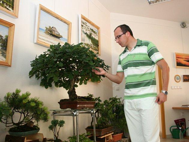 Starosta si prohlíží starou bonsaj