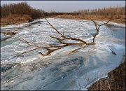 Neobvyklá proměna. Zamrzlé meandry řeky Moravy vytvářejí unikátní scenérii. První led ještě není dostatečně pevný.