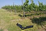 Vědci z Mendelovy univerzity v Brně testují nový dron pro vinaře. V budoucnu by jim měl pomoci odhalit například choroby, růstové nedostatky.