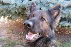 Policejní pes Majk.