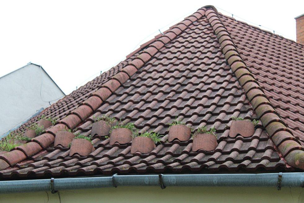 Ze střešních kapes vyrobených z vyřazených pneumatik vyrůstají rostliny v Hodoníně na rohu ulice Pančava.