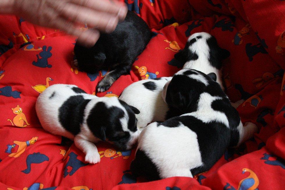 Nový přírustek ve bzeneckém útulku pro kočky a psy. Míša má osm štěňat.