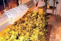 Pěstírnu marihuany našli jihomoravští policisté v Rahotci na Hodonínsku.