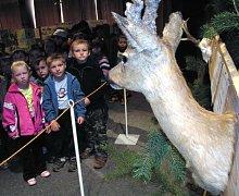 Děti, které přijely na výstavu z mateřské školky v Prušánkách, obdivují srnčí trofej.