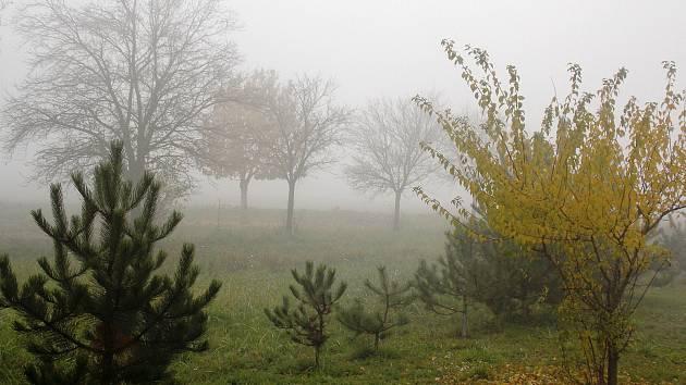 Procházka přírodou stojí za to i v nevlídném počasí. FOTO: Anna Kučerová