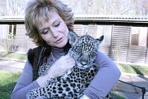 Lenka Burská s jaguáří slečnou Nalou