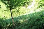 Lokalita nad Javorníkem, která se může dostat na seznam území hájených pro možnou výstavbu přehrady.