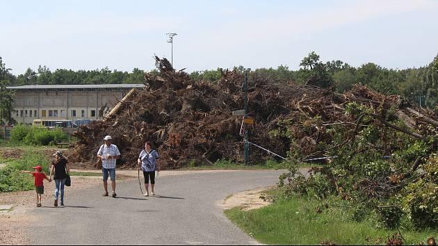 Pařezy tornádem poničených stromů v hodonínské místní části Bažantnice v pondělí 16. srpna.