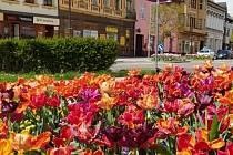 Rozkvetlý Hodonín je oblíbeným cílem výletů.