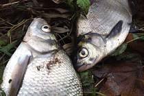Kvůli úniku kejdy z bioplynové stanice v Kozojídkách znovu uhynuly v říčce Veličce ryby.