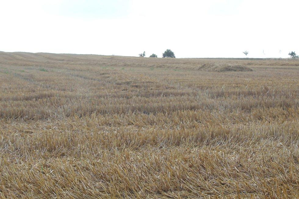 Obilné pole u Vacenovic po žních.