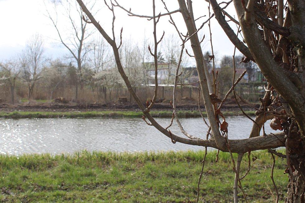 Pozůstatky bývalého topolového stromořadí ve Vracově.