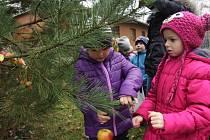 Tradiční zdobení stromku v hodonínské zoo.