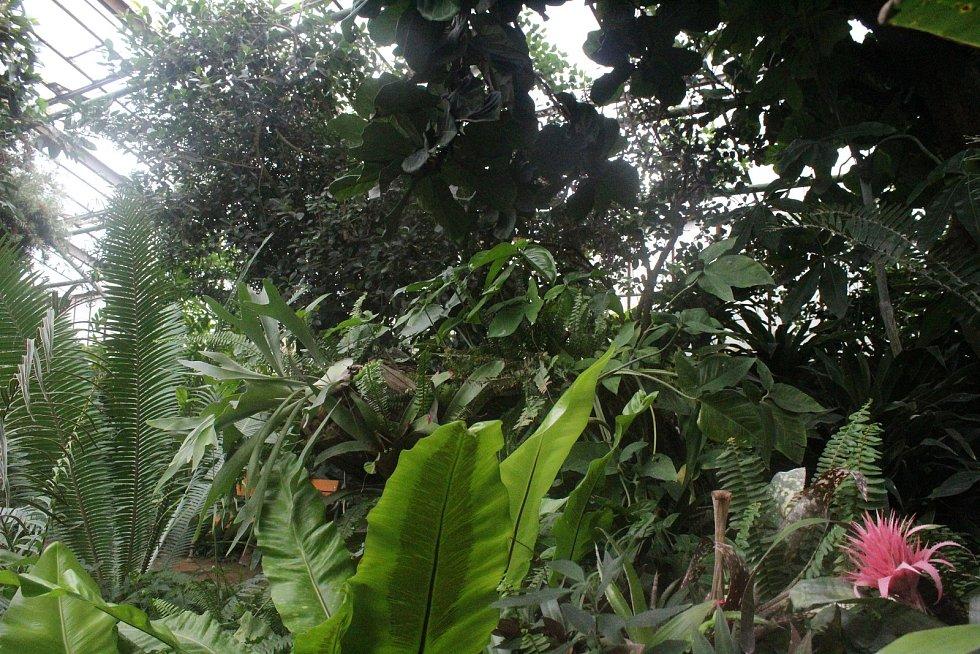 Zimní zahrada hodonínské nemocnice - tropický skleník se světově unikátní veřejnou sbírkou cycasovitých rostlin.